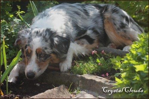http://www.crystalclouds.de/Galerien/besuchblairmai13/_gross/img_0552.jpg
